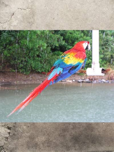 A photo of a parrot added to the document