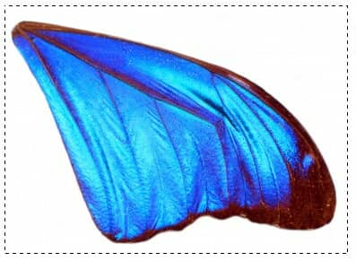 Blue angel wings with rectangular marquee
