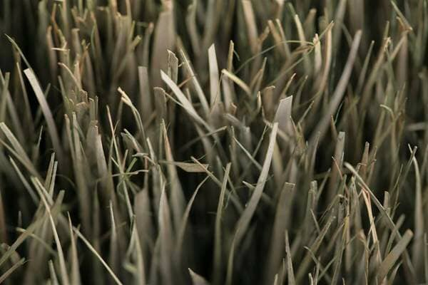 Top view of dried grass