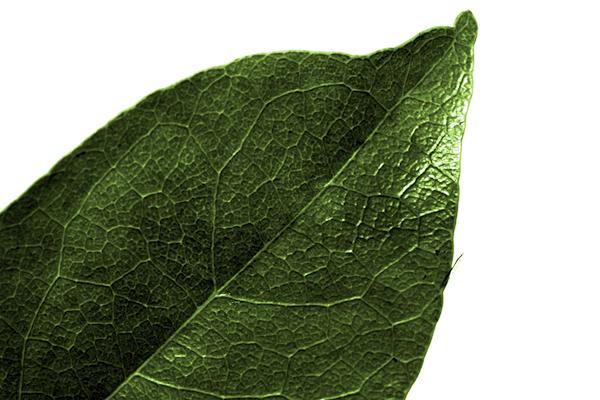 Leaf in color