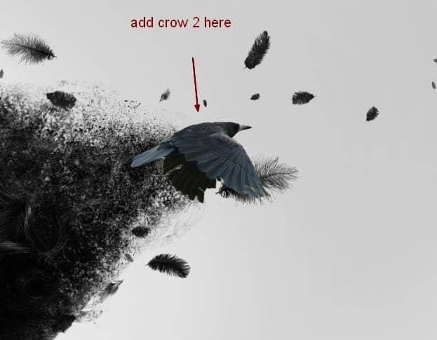 crow20