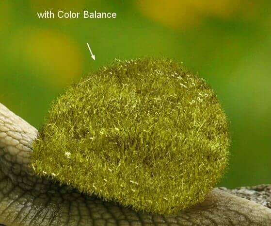 snail11a