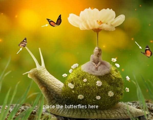 snail33