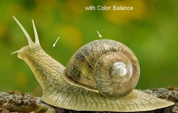 snail7a