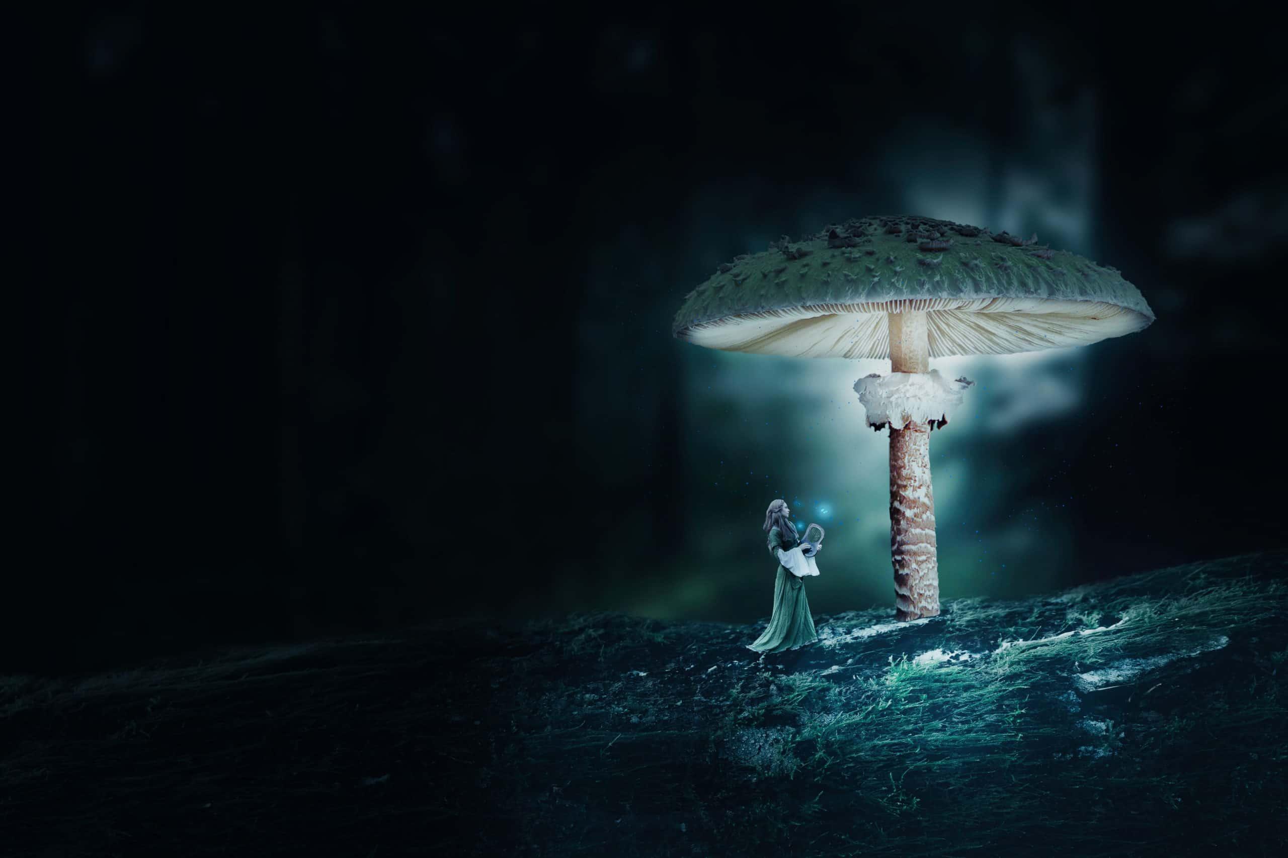Create a Surreal Mushroom Forest Night Scene in Photoshop