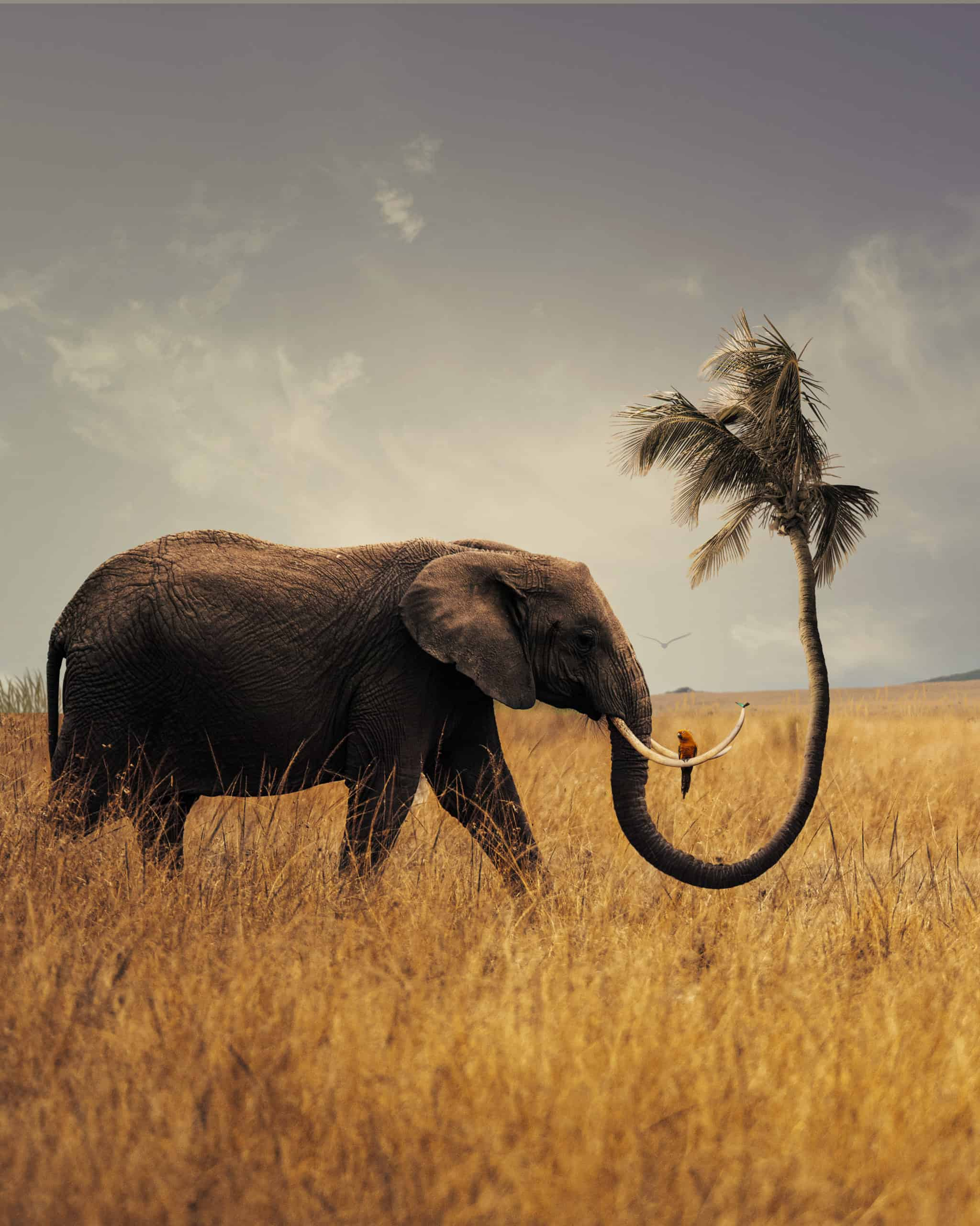 Learn How to Create a Surreal Scene of Elephant with a Palm Trunk